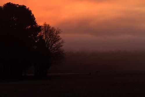 fog sunrise wildlife deer chickamaugapark