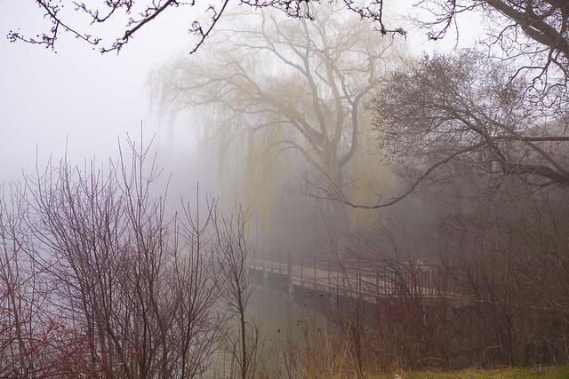 misty dock daytime