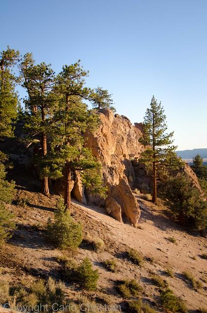 Great basin desert morning california