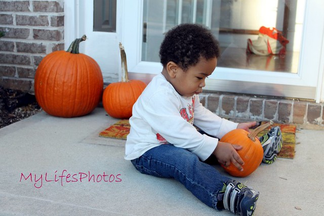 Pookah and the pumpkins