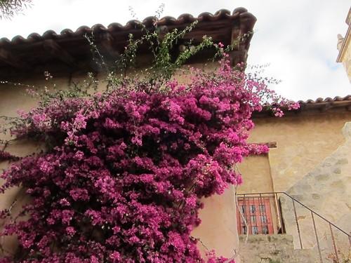 San Carlos Borromeo de Carmelo, mission, carmel IMG_8257