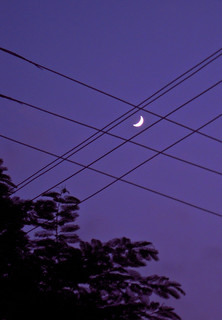 A Tangled Up Moon