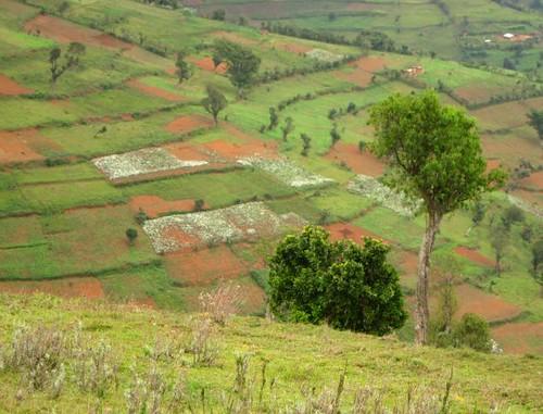 uganda farmlands