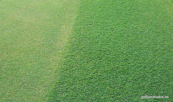 Golf para todos todos sobre el c sped en los campos de golf - Tipos de cesped ...