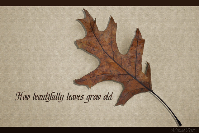 How beautifully leaves grow old