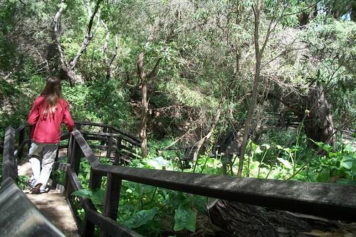 Meekadarribee Falls Track No. 4