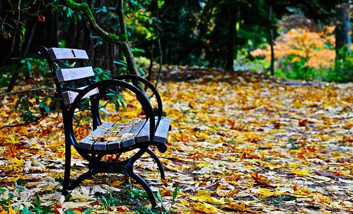 seattle autumn trees fall leaves bench washington arboretum autumncolors fallfoliage washingtonpark montlake washingtonparkarboretum
