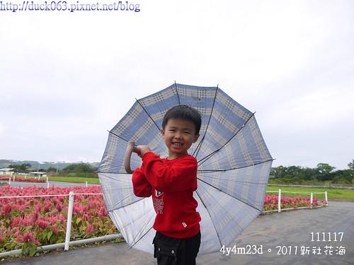 P1130302花海