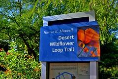 Desert wildflower loop trail