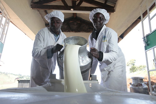 EADDP (East African Dairy Development Program) Metkei Multipurpose Company Ltd.