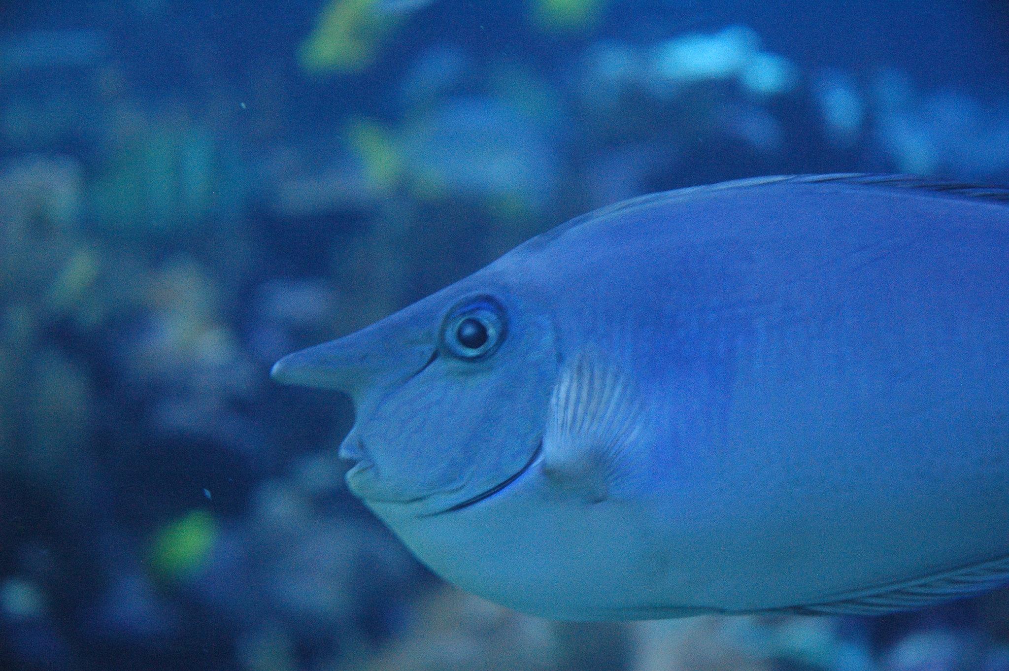 Image Result For Maui Aquarium