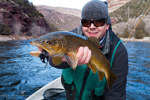 Picture of the day brown on the green orvis news for Fly fishing green river utah