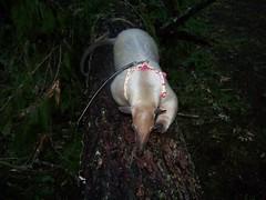 Along a fallen tree