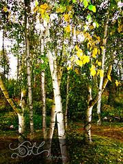 Finch Arboretum - October 2011