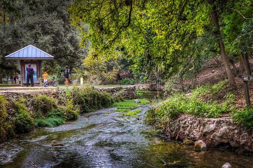 park trees nature water birds canon river outside texas tx ducks hdr newbraunfels landapark 2011 newbraunfelstx canon60d
