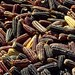 Maíz - Indian corn; Santa Cruz Tacache de Mina, Oaxaca, Mexico por Lon&Queta