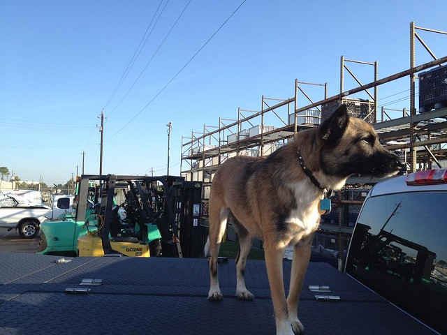 Truck Bed Dog Canopy