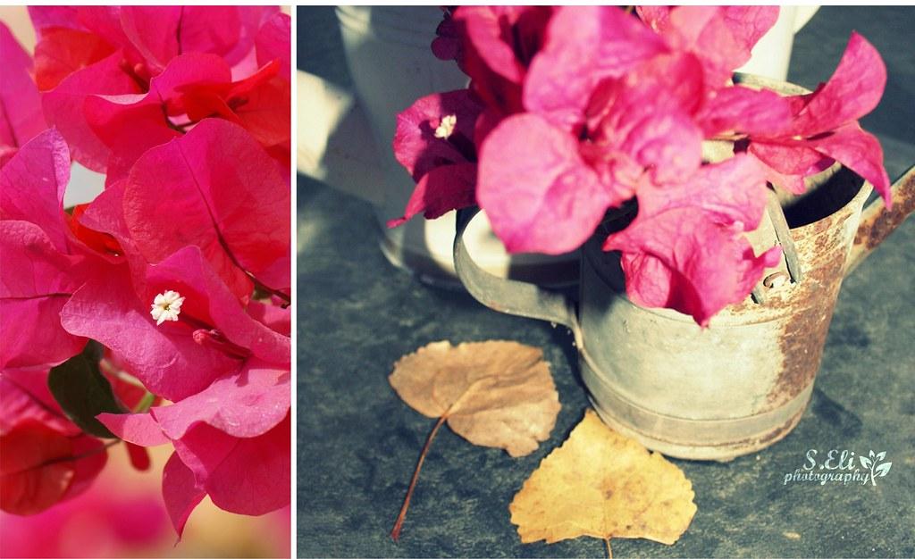 My garden's cozyness Autumn