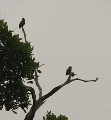 Guyana-9025