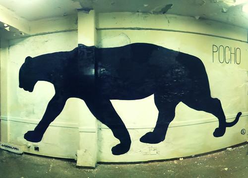 POCHO #gaucholadri #streetart #streetarteba