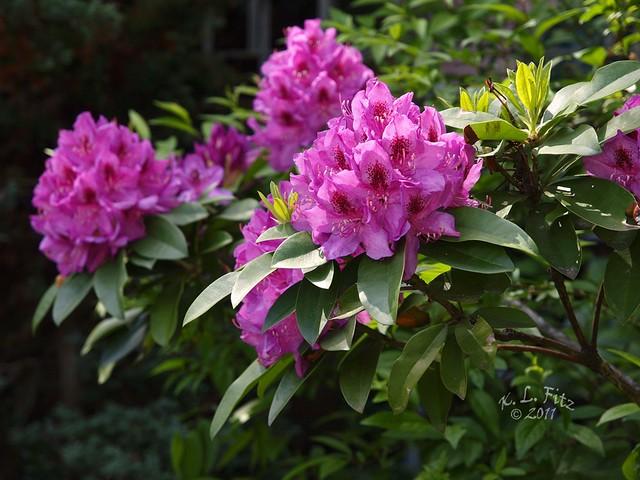 Spring Flower Bushes 2 Flickr Photo Sharing