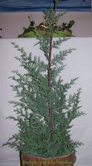 Árbol de Jesé (primer Domingo de Adviento)