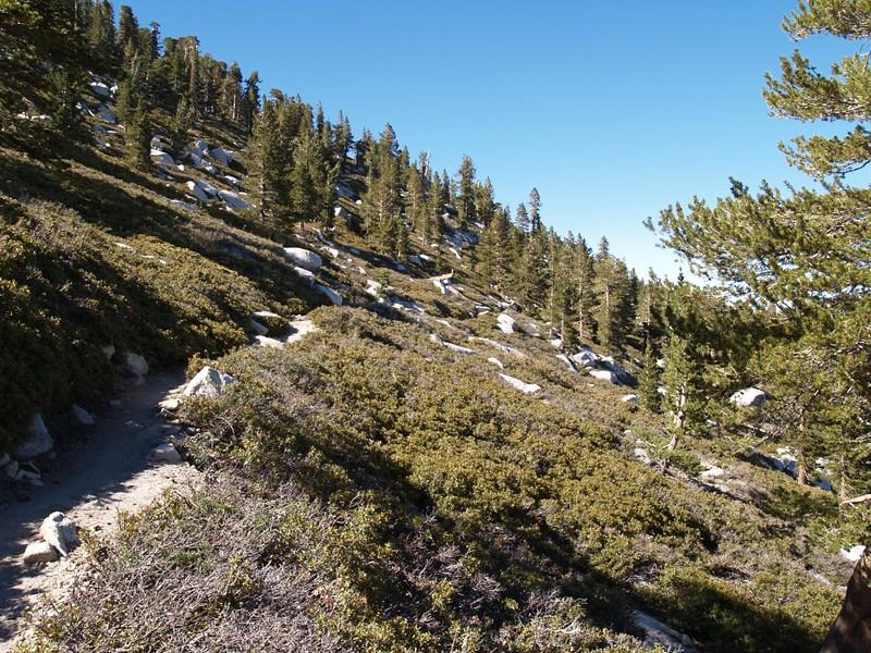 San Jacinto Peak Trail above Wellman Divide