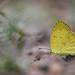 Yellow by Rhivu_Ray