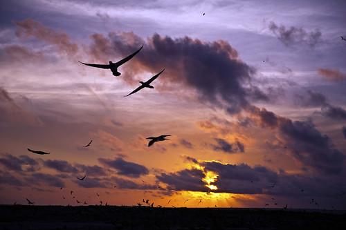 sunset birds pajaros puestadesol nuages reflets coucherdesoleil oiseaux reflejos 2011 doubleniceshot tripleniceshot 2011nthcrus