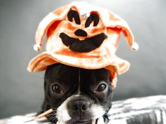 """Oct 27 2011 [Day 361] """"Jack-Jack Our Jester"""""""