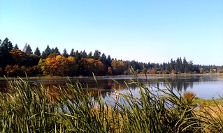 Coffee Lake Wetlands