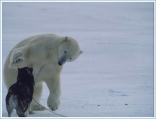 Polar Bear Hugs Dog (2 Of 6)
