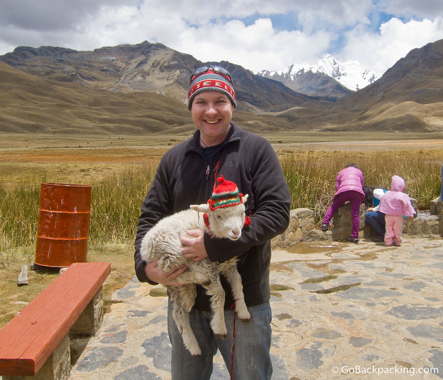 Take the time to hold a soft baby animal in Peru, whether it be a llama, alpaca or goat