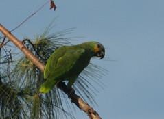 Guyana-8506