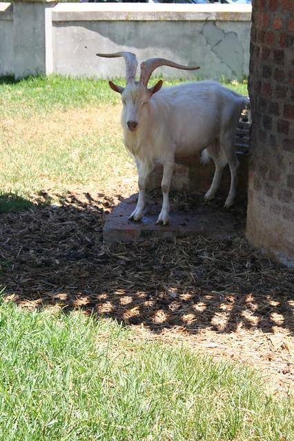 Fairview goat house 2