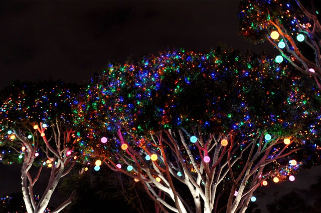 Lit-Up Trees at Downtown Disney