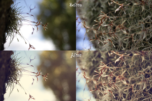 air plant flowers before&after