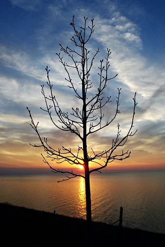 sunset ohio sky sun tree nature water outside outdoors lakeerie parks oh sunsetpark willoughby lifeintheoutdoors