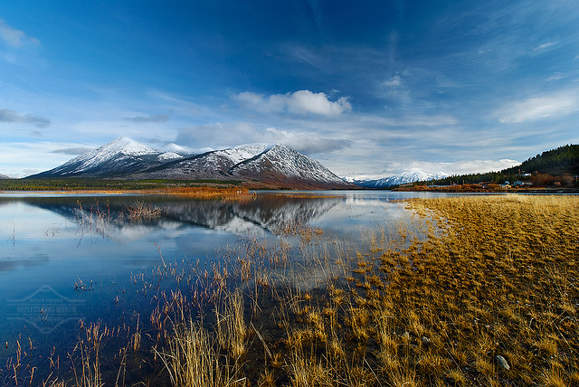 carcross mature singles Once you get to the shore excursions you will visit the historic village of carcross 41 mile trail that begins by winding through mature cedar and.