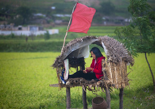Monitoring the fields before harvest - North Korea