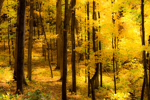 autumn trees light usa brown sun green fall nature leaves yellow wisconsin forest landscape ilovenature photography sticks woods day glow image pentax path dream photograph kr ppg browntown pentaxphotogallery pentaxphotogallerycom kohlbauer browntownwisconsin cadizsprings hardpancom marckohlbauer