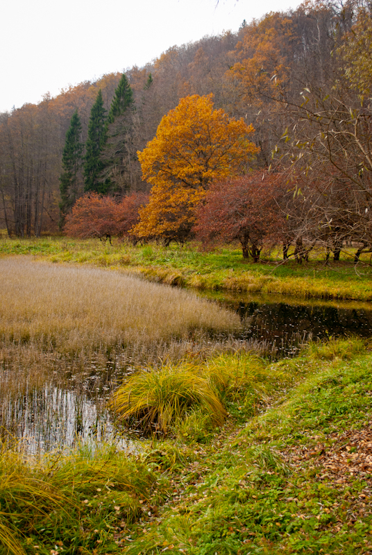 Nice autumn image:-) DSC_8841