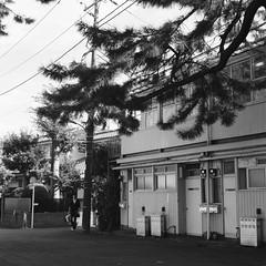 Photo:Rolleiflex_Ota_20111101_05 By Jun Takeuchi