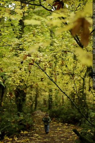 autumn foliage leaf walk in tryon creek state park    MG 1740