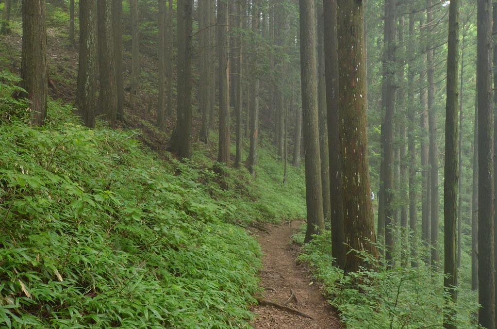 20110806 鋸山への登山道