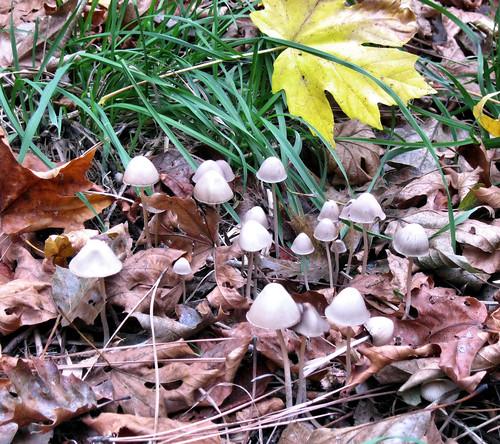 magicshrooms_04_11-18-11