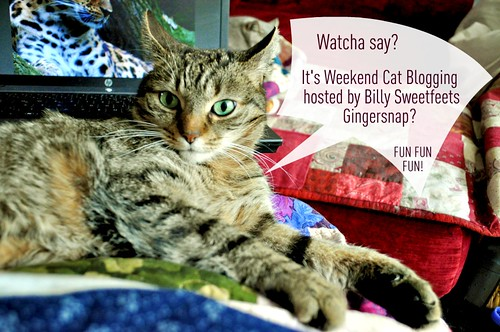 Weekend Cat Blogging #337