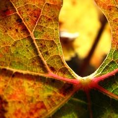 Autumn topographies no. 3