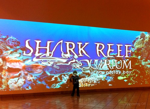 Shark Reef. Las Vegas.