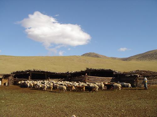 mongolieelevagearkanghaibayankhongor